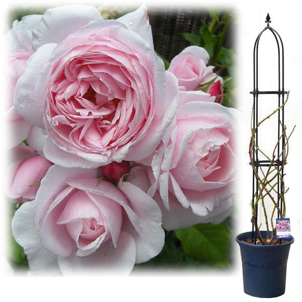 バラ オベリスク ガーデニング初心者さん必見! 初めての本格的な「バラの花壇」づくり[完全保存版]